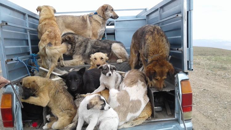 واکنش هنرمندان به سگکشی
